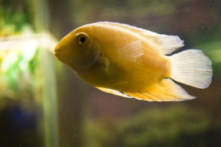 Fishes in an aquarium float and dont think of anything photo