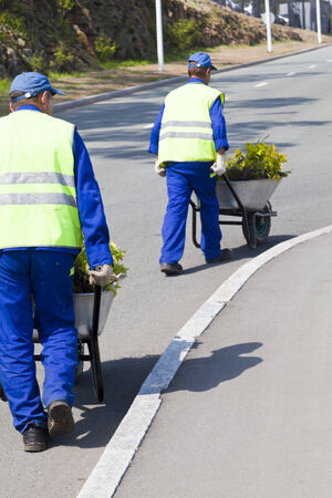 Workers carry plants in carts for landing photo
