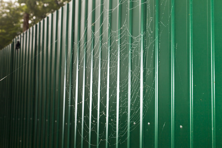 Cobweb covered in rain drops of water photo
