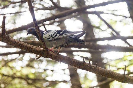 Dove sitting on a branch in a dense forest photo