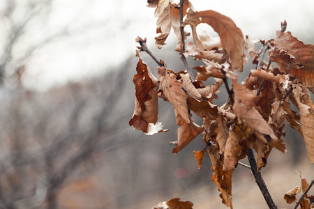 remained: The dry leaves which remained on a tree are going to fly on the soil Stock Photo