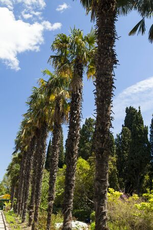 pleasing: Palm trees and cypresses grow in the South and are pleasing to the eye beauty