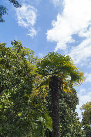 Palm trees and cypresses grow in park of the southern city on pleasure to people photo