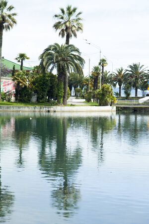 vacationers: City pond in an environment of palm trees waiting for vacationers