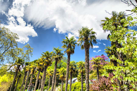 Palm trees and cypresses grow in the South and are pleasing to the eye beauty photo