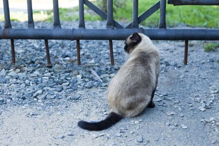 earthly: The cat in the yard thinking about eternity, doing earthly affairs
