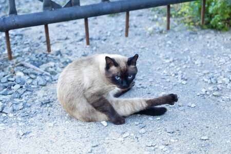 pet cat: The cat in the yard thinking about eternity, doing earthly affairs