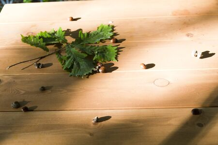 dim light: Oak leaves and acorns lie on a wooden table in the dim light of sunset Stock Photo