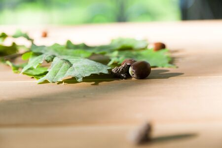 eatable: Oak leaves and acorns lie on a wooden table in the dim light of sunset Stock Photo