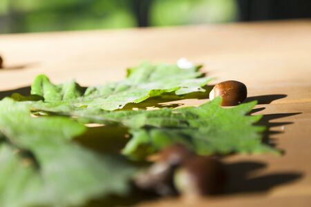 dim: Oak leaves and acorns lie on a wooden table in the dim light of sunset Stock Photo