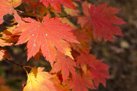 pleasing: The autumn wood waiting for winter is pleasing to the eye rich paints Stock Photo