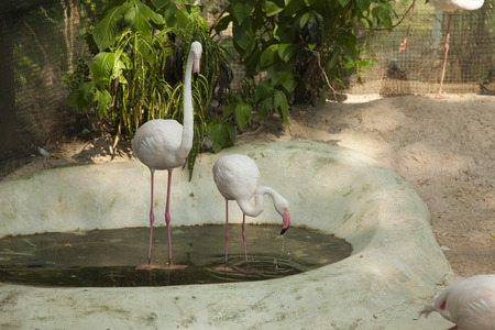 look for: Flamingos in a pond look for something when find - sleep