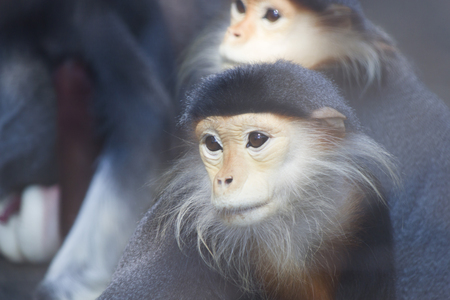 pay attention: Monkeys in a zoo go about the own business and dont pay attention to people