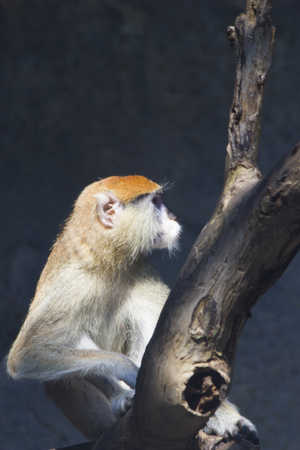 biped: Monkeys in a zoo go about the own business and dont pay attention to people