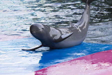 dolphinarium: Dolphins in a dolphinarium address the audience and are very happy