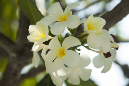 Beautiful tropical flowers blossom on pleasure to all people