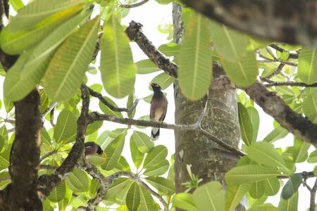 mating: Tropical birds on a tree sing on pleasure to people Stock Photo