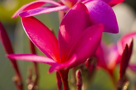 pleasure: Beautiful tropical flowers blossom on pleasure to all people