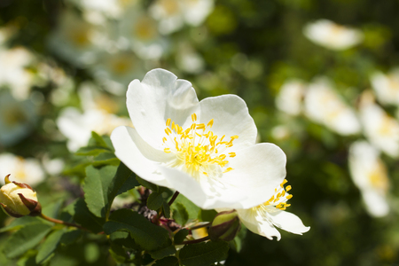 pleasing: Beautiful spring flowers are pleasing to the eye beauty and tenderness