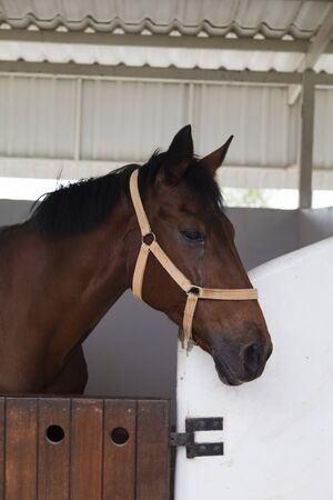 racehorses: The horse in a stall waits when she is let out to jump
