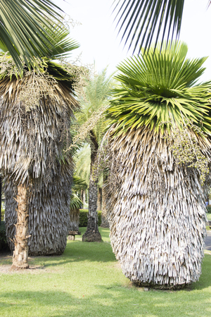 joshua: Unusual palm trees grow in very unusual park Stock Photo