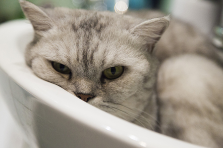 The cat in a sink lies and sadly looks at the one who has woken him