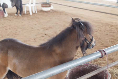 Horses big and small are closed in stalls and shelters Stock Photo