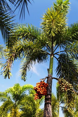 Palm trees different and beautiful also grow differently Фото со стока