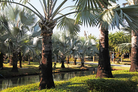 Palm trees different and beautiful also grow differently 写真素材