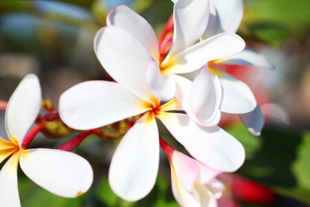 Beautiful tropical flowers are pleasing to the eye to tropical inhabitants Stock Photo