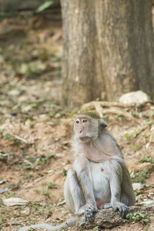 Monkeys at liberty stick to people in search of food
