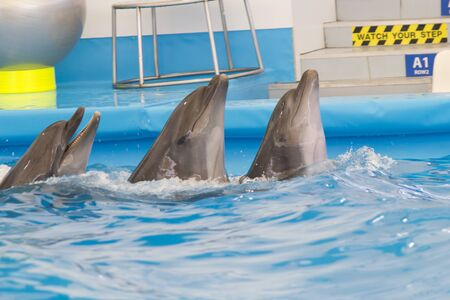 Dolphin performs in pool for joy of children and adults