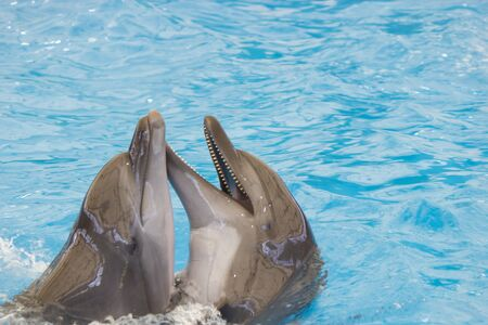Dolphin performs in pool for joy of children and adults 版權商用圖片