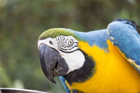 A very beautiful parrot sits very nicely and looks up 版權商用圖片