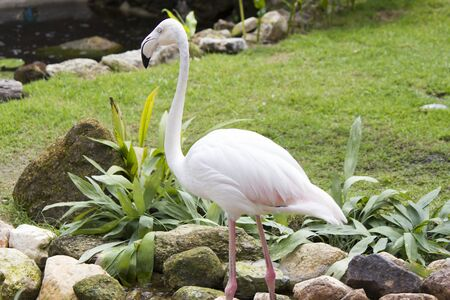 Flamingo is an elegant bird, walks elegant, eats elegant, lives elegant