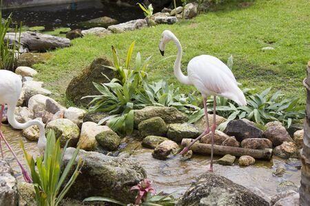 Flamingo is an elegant bird, walks elegant, eats elegant, lives elegant