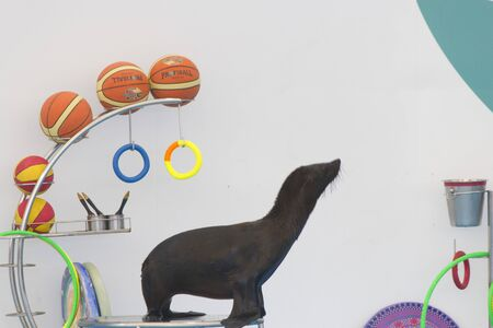 Sea cat is a real artist and very pleases children with his talent