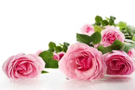 Pink roses lying on the water