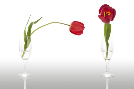 Two Tulips in a glass with water Stock Photo