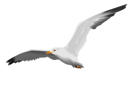 Seagull, flying in the sky with my wings