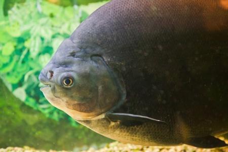 Exotic fish swimming in an aquarium.