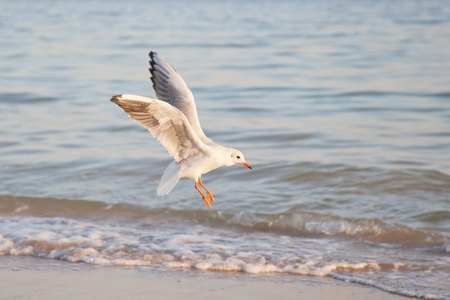 Seagull, flying in the sky with my wings. photo