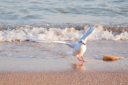 Seagull, flying in the sky with my wings.