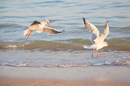 Seagulls on the background of the sea, with open wings.