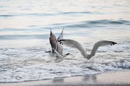 Seagulls on the background of the sea, with open wings  Stock Photo - 13659785