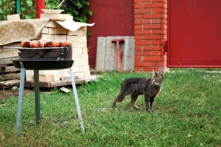 Hungry cat and bratwurst