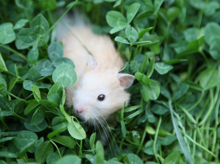 Hamster on the green grass