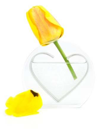 Yellow tulip on a white background