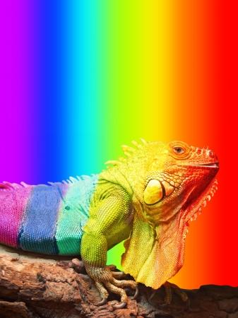 Large chameleon, sitting on a tree Stock Photo