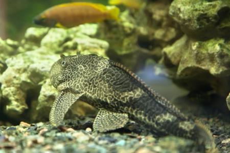 Exotic fish swimming in an aquarium